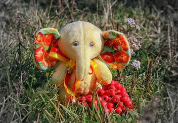 Puff the baby elephant