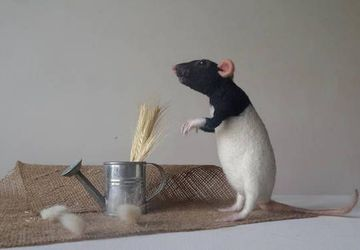 Pet rat portrait Memorial art doll Custom needle felted animal