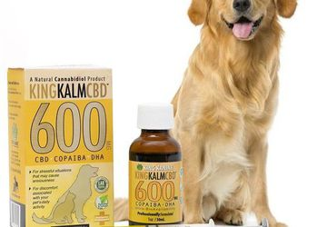 600mg CBD for Dogs | Save Up to 30% | King Kanine