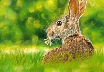 Sweet Clover | Original wildlife painting