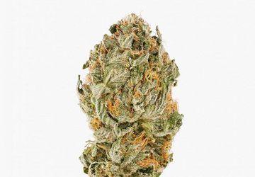Pink Kush (AA) | Hush Cannabis Club