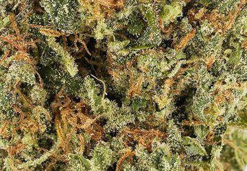 Lemon Haze Cans (AAAA) | Hush Cannabis Club