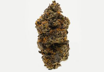 Buy Park Fire OG (AAAA)Weed in Hamilton   Hamilton Stoni Cannabis
