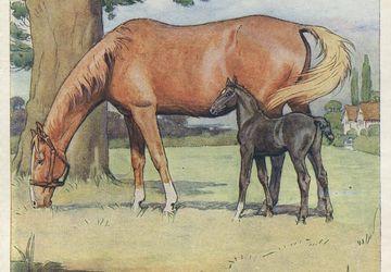 Cecil Aldin Vintage Antique Print-Color-Black Beauty-Horses-1930-First Memory