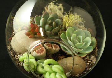 DIY Succulent Terrarium Class