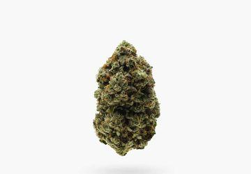 Buy Flower In Hamilton @ Stoni Cannabis | Hawaiian Hammer (AAAA) Sativa