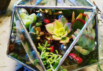 Clear Bevel triangle sphere with succulents