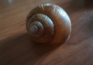 Natural Snail House Decoration, set 5 pcs