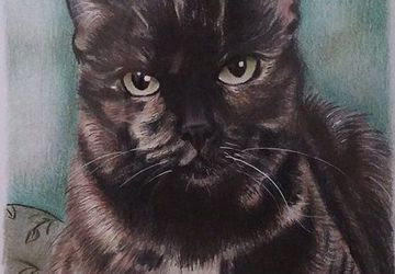 Custom pet colored pencils drawing from your photo