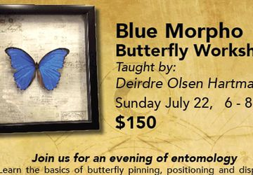 Blue Morpho Butterfly Workshop