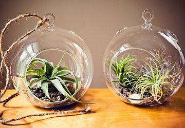 How to make a terrarium?