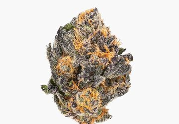 Buy Black Cherry Punch (AAAA) Weed Online   Calming and Relaxing Strain