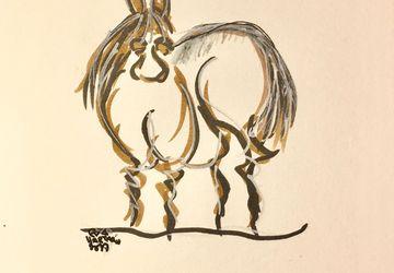 Horse/Mule/Donkey