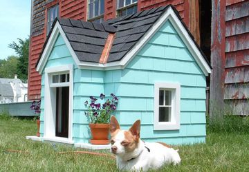 How to build a dog house: Step by step guide