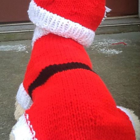 sweater petitedog set