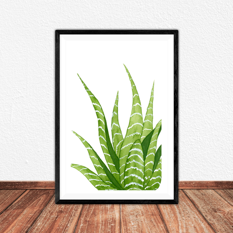 artprint succulent cactus print illustration watercolor gift art giftidea fineartprint