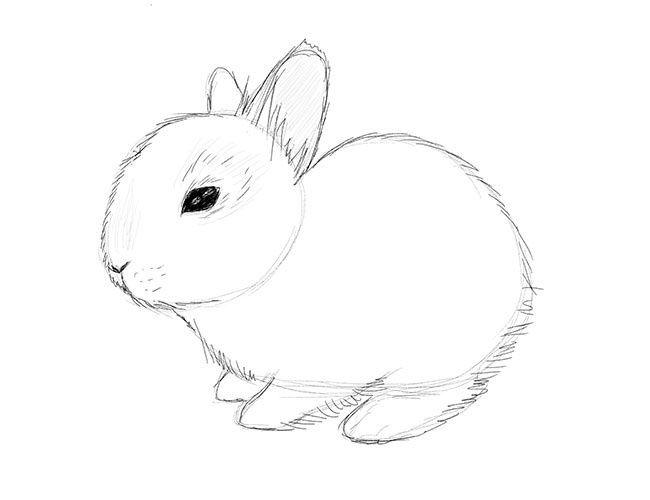 as we know bunnies are very cute and fluffy so we are going to add more fur this time a little bit lighter as on the picture