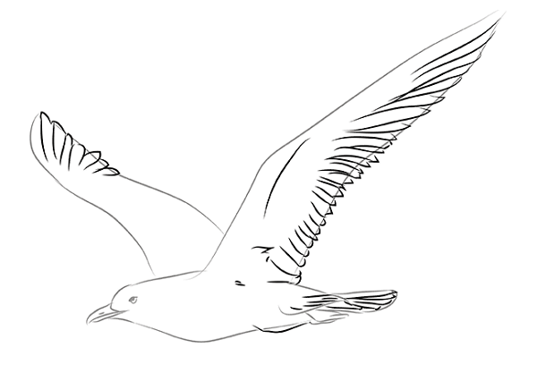this is how a seagull looks like to make it more realistic proceed to the next image draw shadows