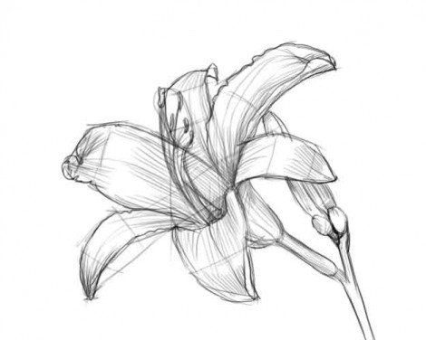 draw picture flower pencil art