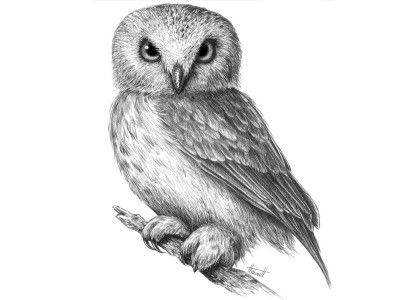 art shadows owl pencil draw