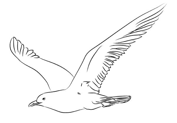 step seagull draw pencil art