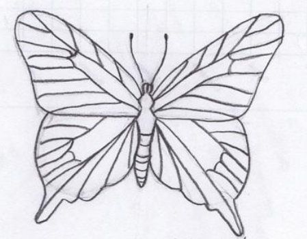 butterfly picture draw pencil art
