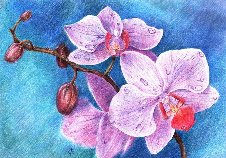 orchid art draw pencils color