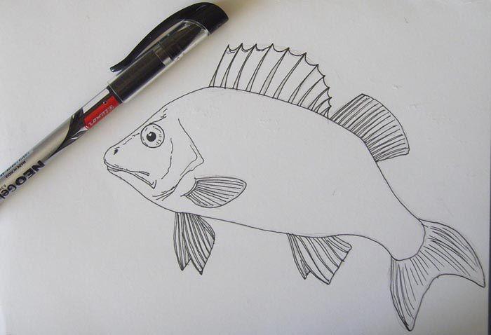 colors fish draw pencil art
