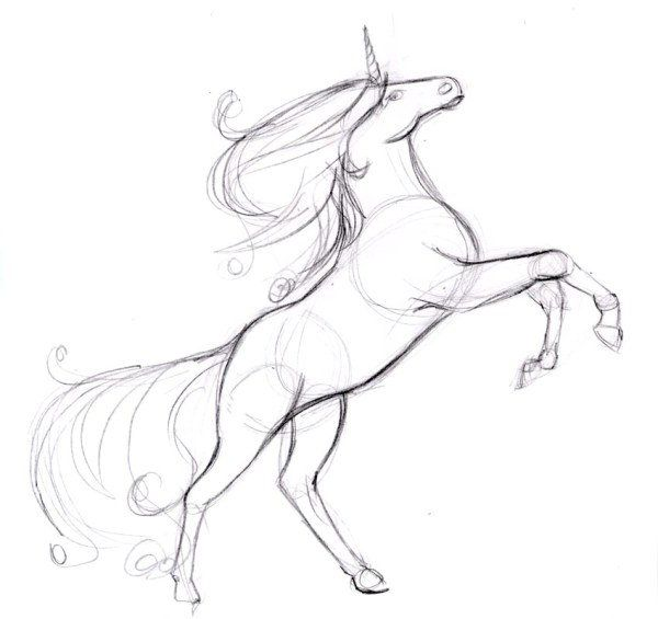 color unicorn lines draw pencil art
